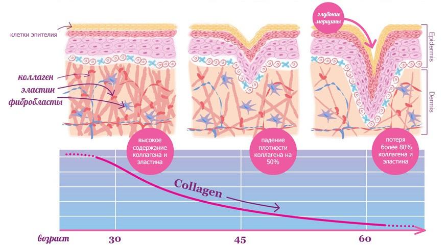 Как пептиды воздействуют на кожу?