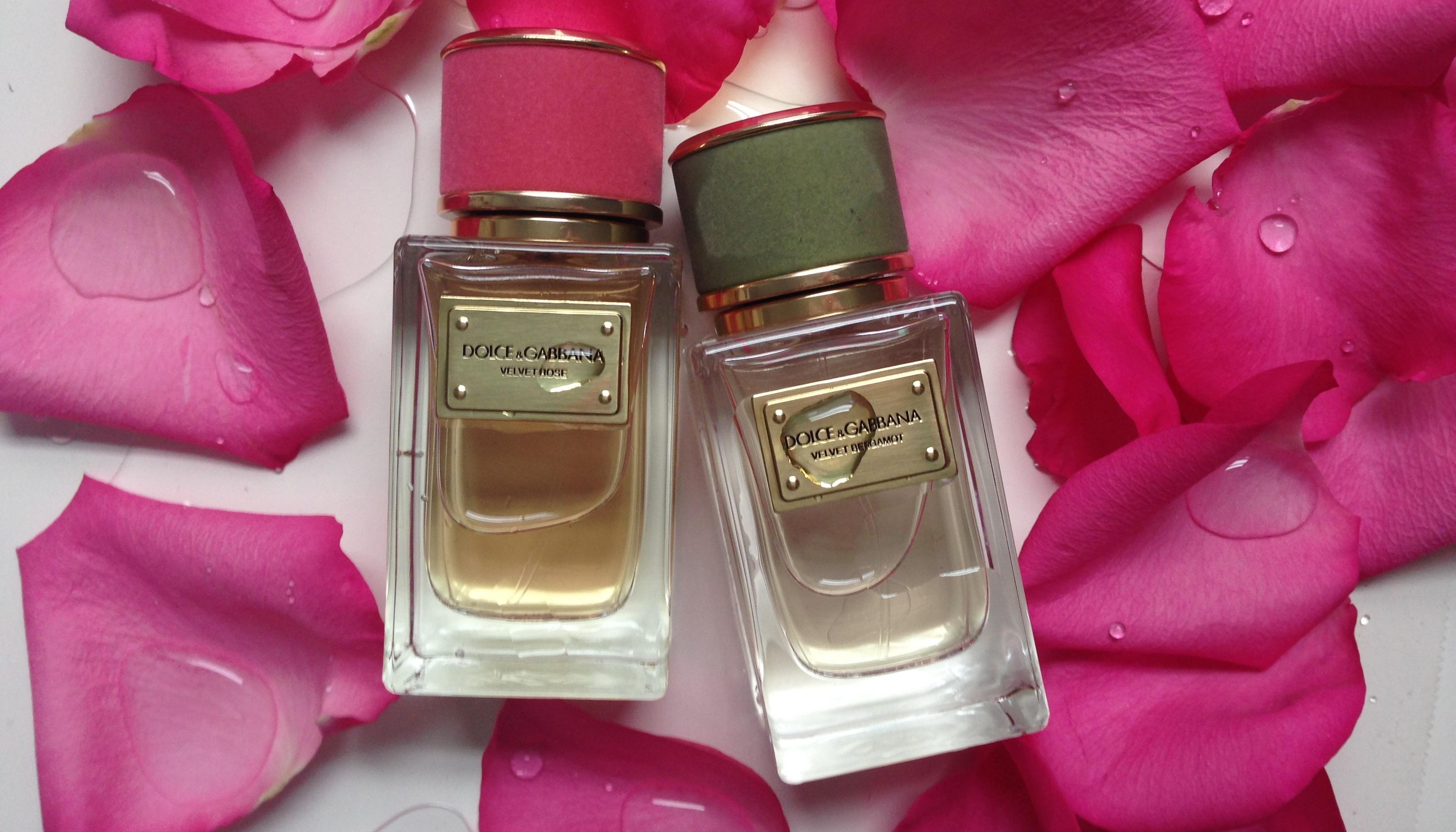 Velvet Rose, Dolce & Gabbana