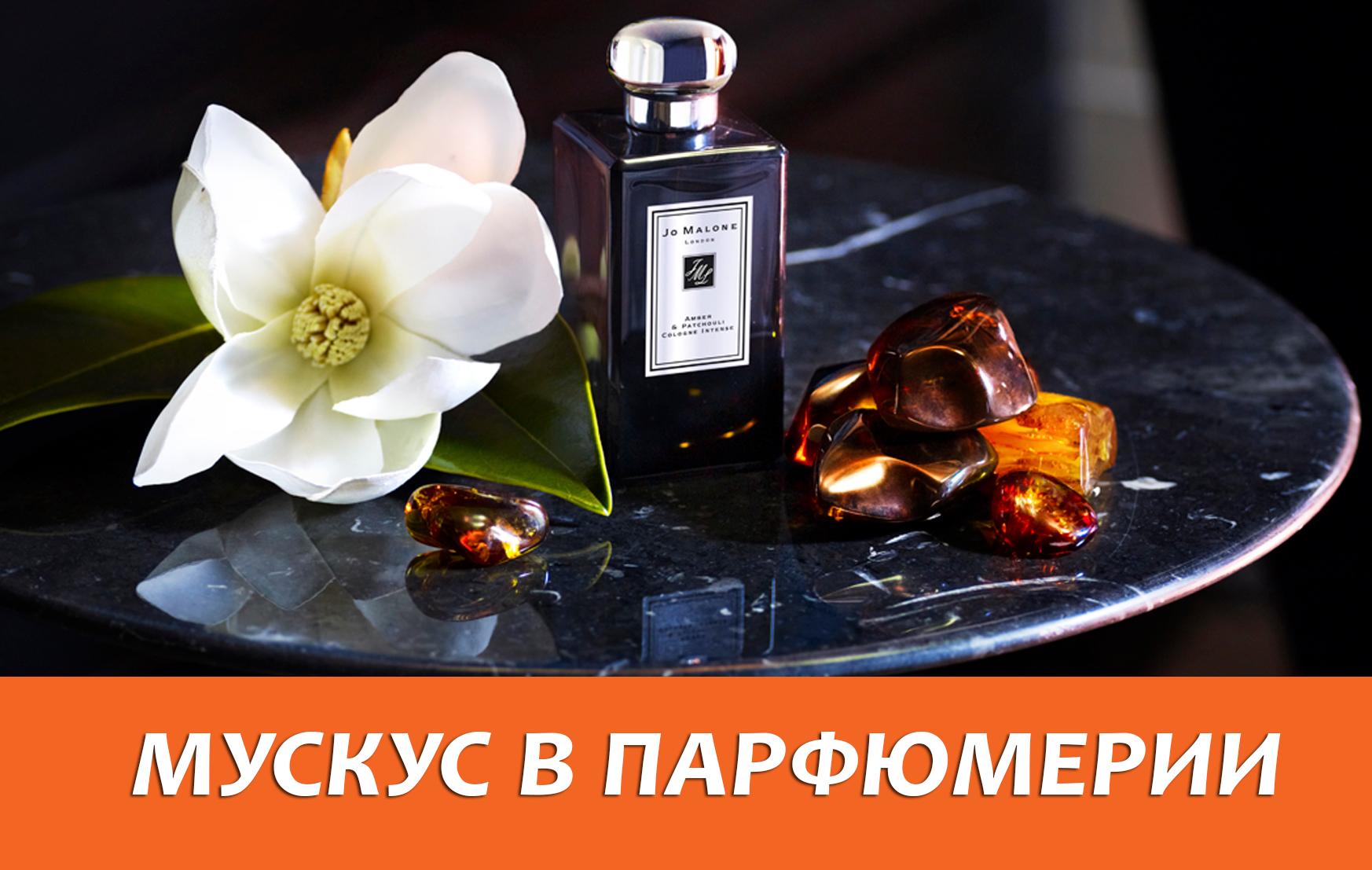 Мускус в парфюмерии – на что похож этот запах?