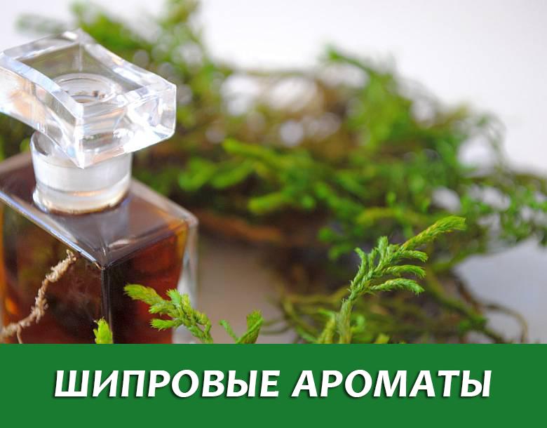 Шипровые ароматы – что это, и какие лучшие для женщин?